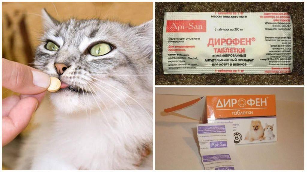 Чистотел для кошек от глистов: инструкция по применению