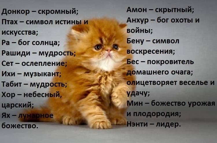 Клички для котов и кошек бобтейлов - красивые имена для котенка мальчика и девочки
