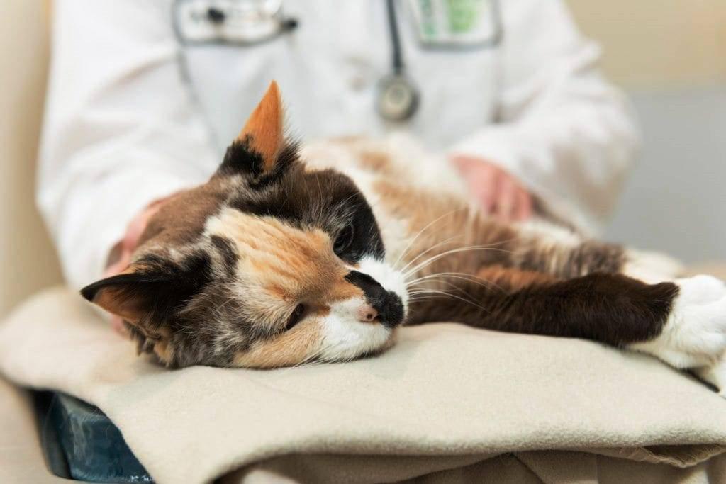 Кошка заболела - симптомы, что делать, как лечить