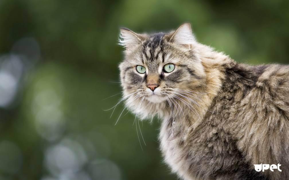 Об ответственности хозяина животного