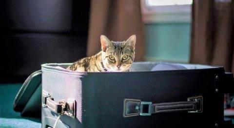 Где оставить кота в москве на время отпуска