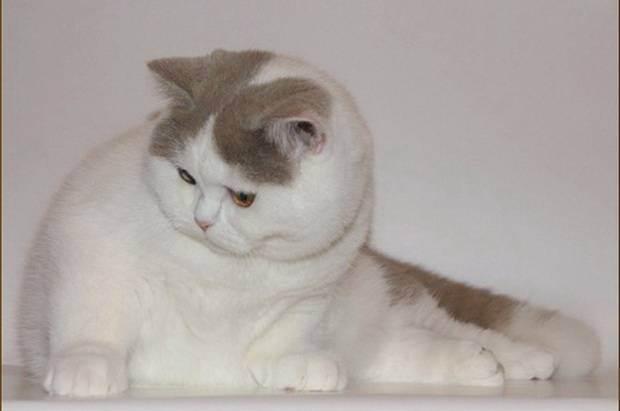 Кошка в доме, или как я победила аллергию. как избавиться от аллергии