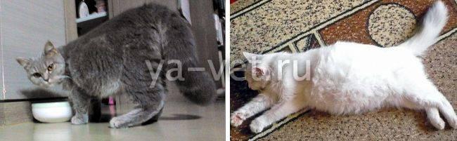 Вирусная инфекция у кошек и собак: симптомы, лечение, опасность