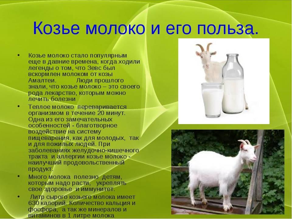 Молоко для котят: можно ли давать коровий, козий, магазинный продукт малышам?