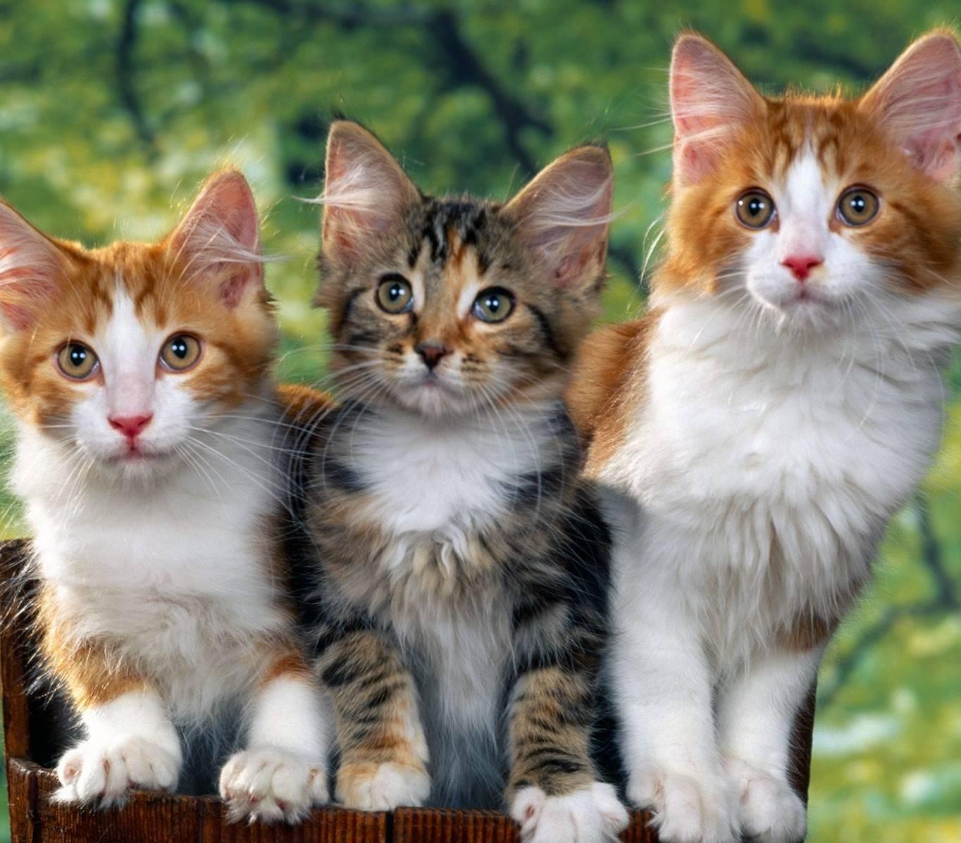 Самые умные породы кошек в мире