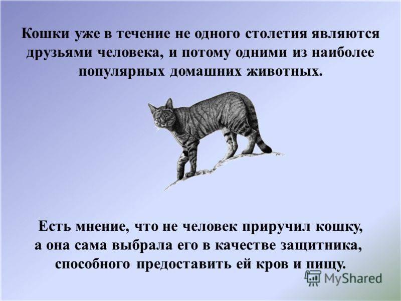 Когда люди приручили кошку | сухарева башня
