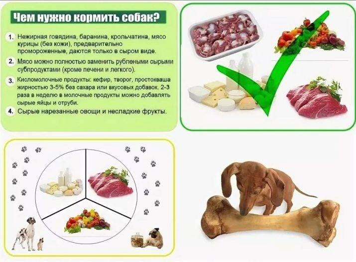Чем нельзя кормить кошек - список продуктов + информация по правильному кормлению