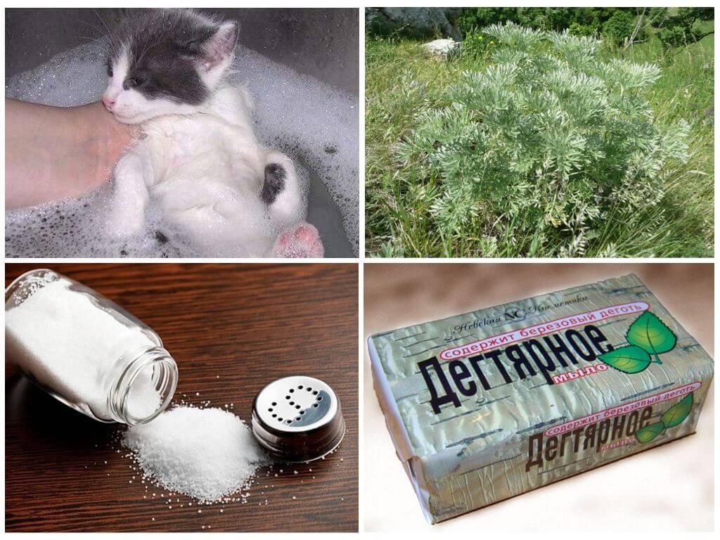 Как вывести блох у кошки в домашних условиях народными средствами?