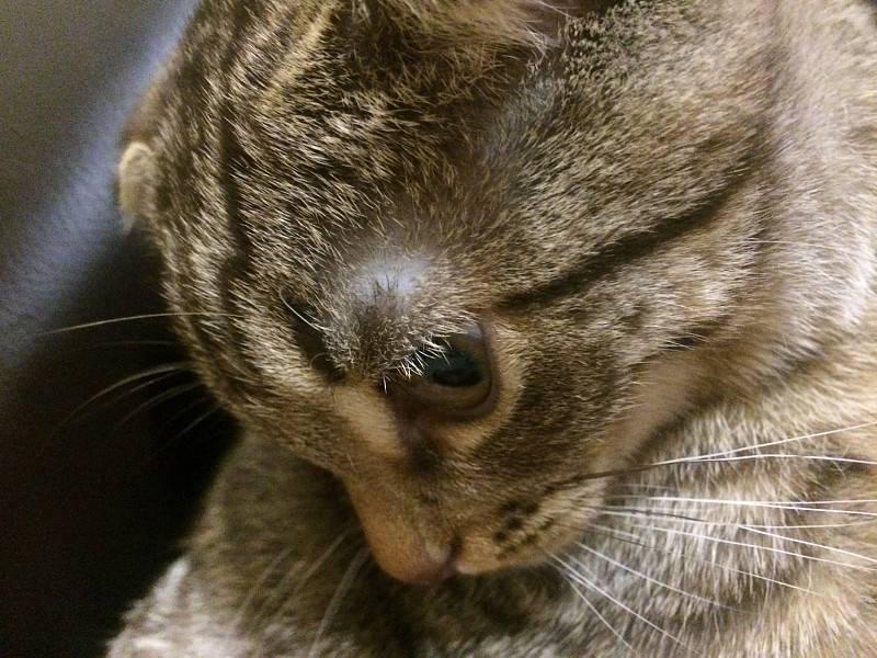 Что делать, если у кошки облысели уши?