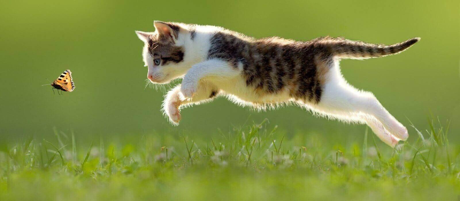 Кормление истощенных кошек