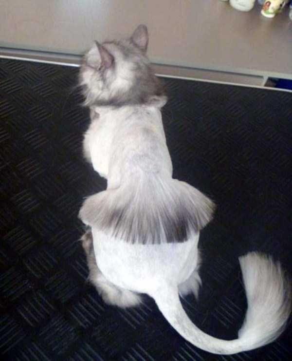 Как самостоятельно в домашних условиях подстричь шерсть у кота, как это делают профессионалы?