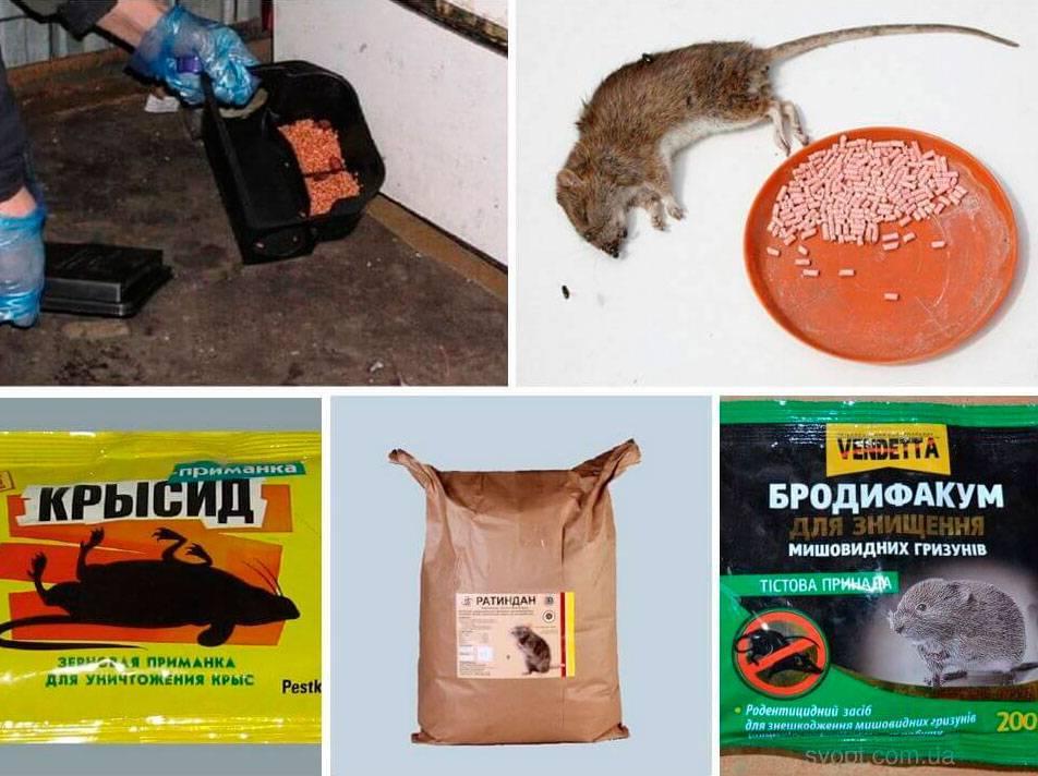 Кошка отравилась крысиным ядом: что делать и чем ей помочь?