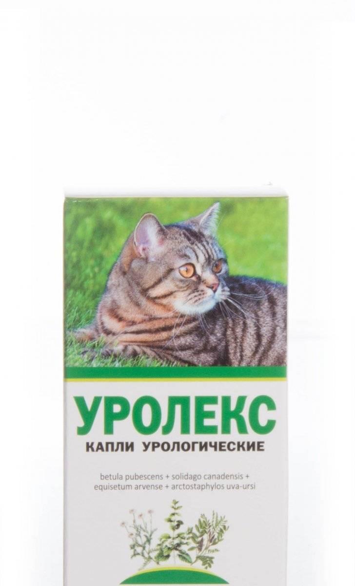 Уролесан для кошек и собак инструкция по применению уролесана в ветеринарии состав лекарства дозировка отзывы