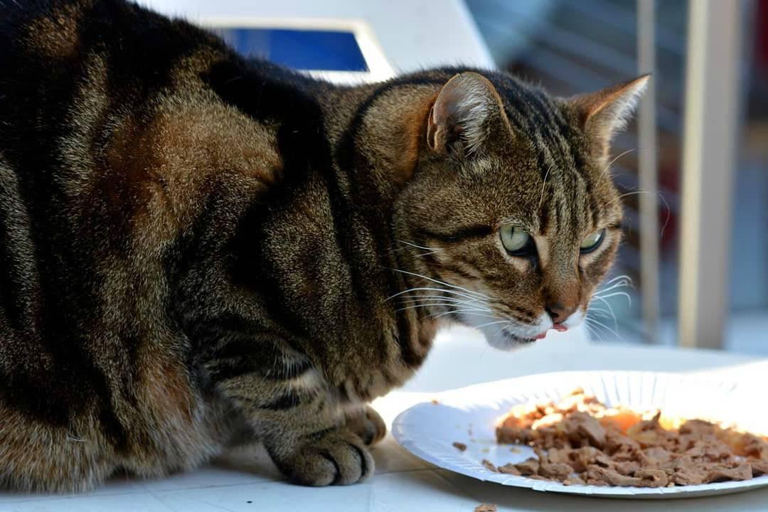 Почему кошки закапывают еду: причины, что делать