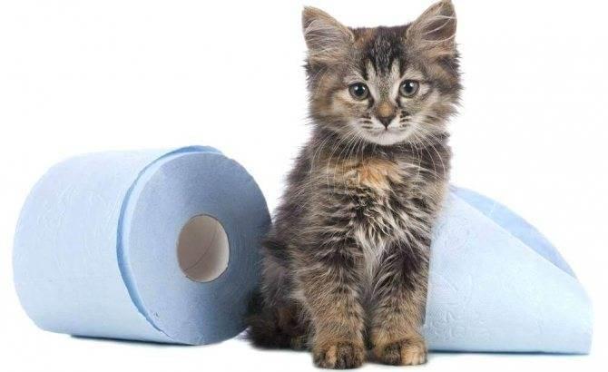 Кот теряет кал. у шотландской или британской кошки понос: причины и лечение. у кота недержание кала