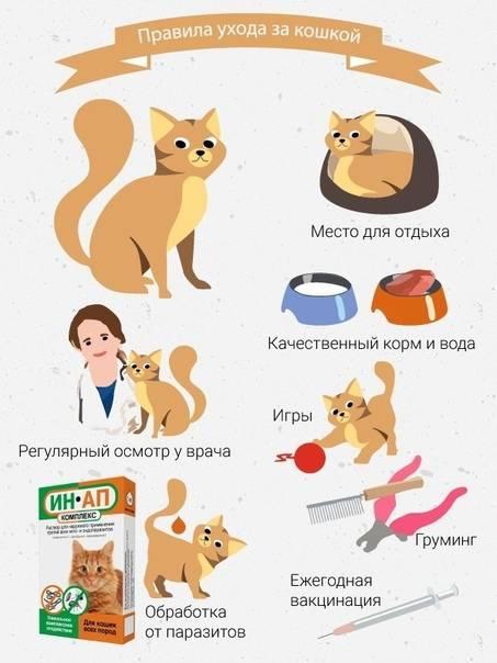 Как ухаживать за котенком и взрослой кошкой?