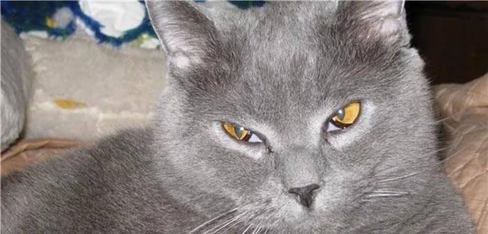 Когда котята открывают глаза после рождения и начинают видеть?
