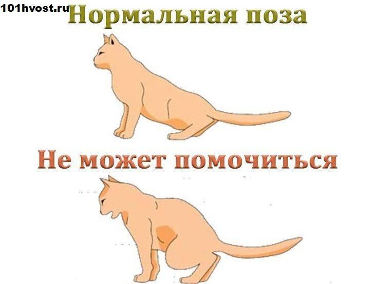 Поведение кошки перед первыми и последующими родами, подозрительные симптомы