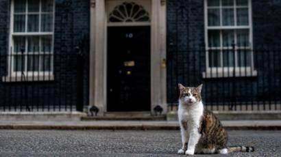 Как ухаживать и содержать британских кошек?