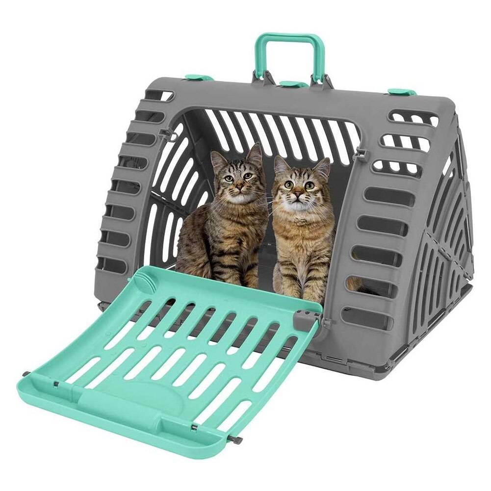 Переезд в тайланд с котом. инструкция для чайников