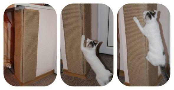 Как отучить кота царапать мебель и драть обои в квартире
