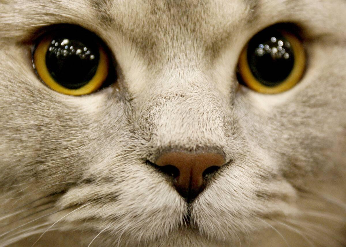 Коты-экстрасенсы: почему кошки смотрят в пустоту