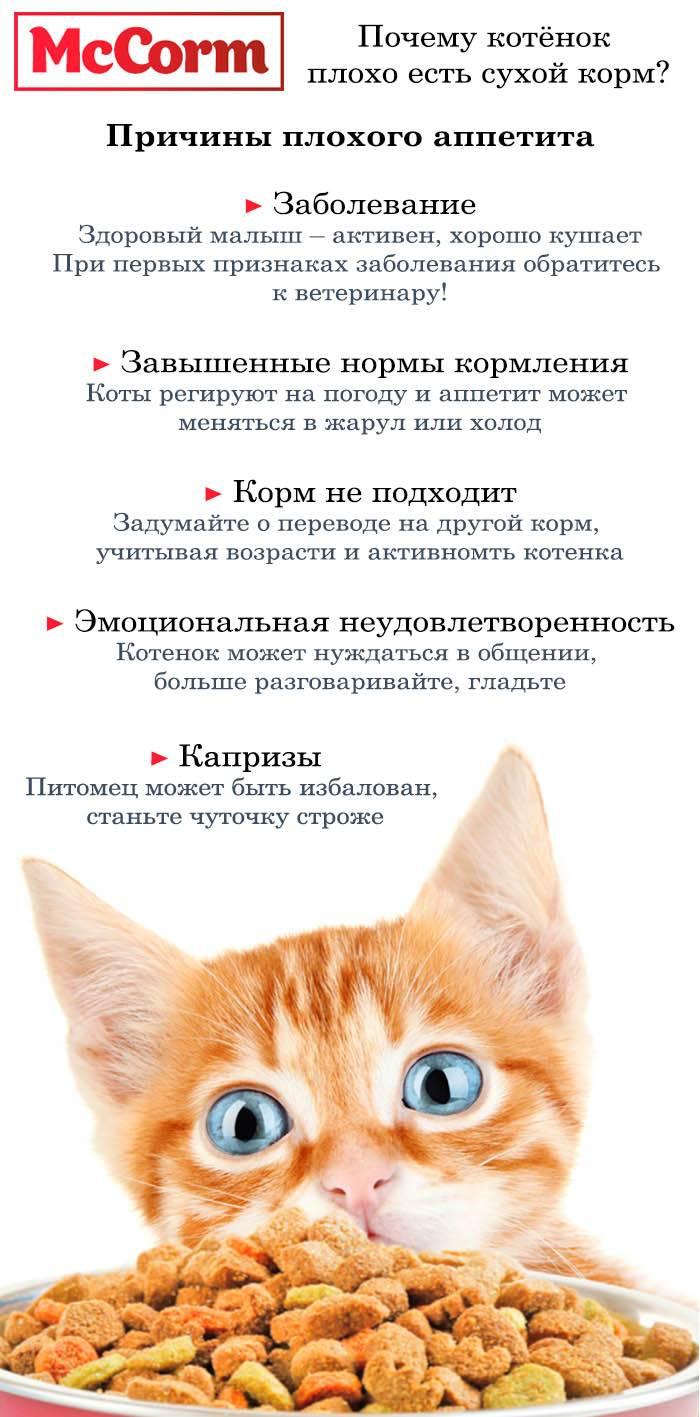 Возможные причины, почему котенок плохо ест