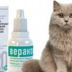 Инструкция препарата «веракол» для кошек – состав и противопоказания