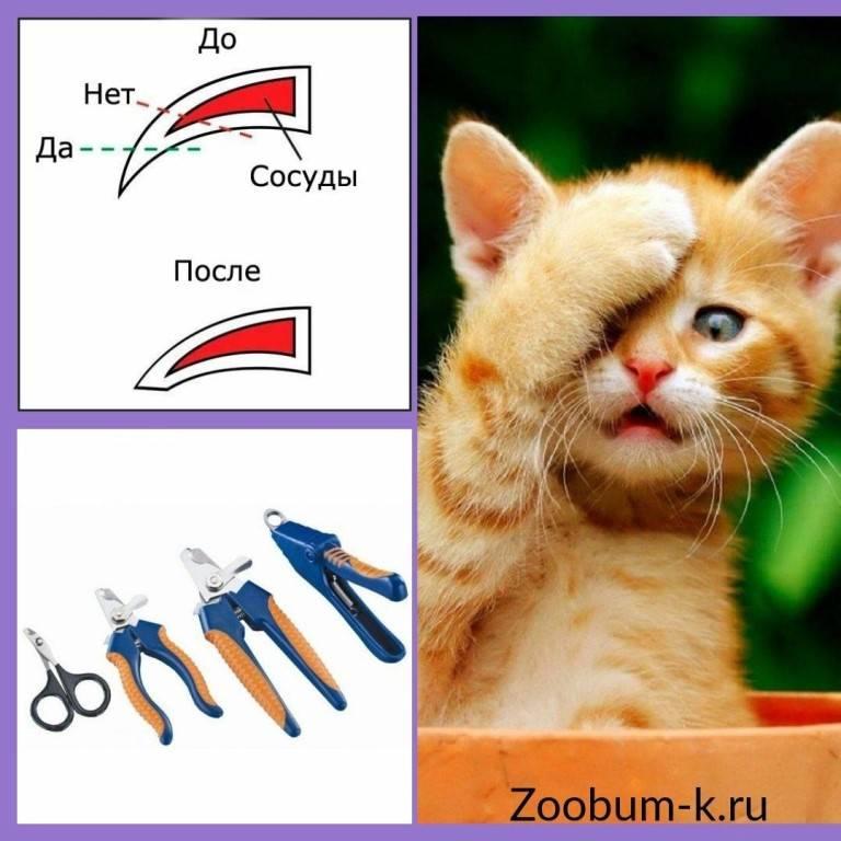 Стрижем кошке и коту ногти