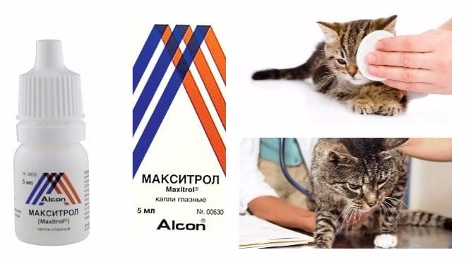 Конъюнктивит у кошек фото: изучайте с нами