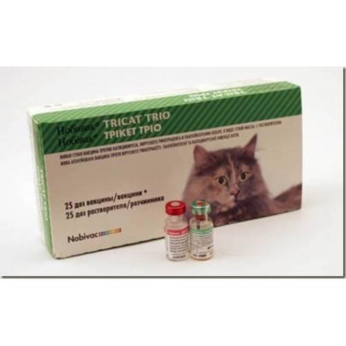 Чумка у кошек: признаки, симптомы, формы болезни, лечение, прививки