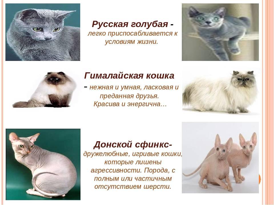 Какую кошку лучше завести в квартире? список самых лучших пород котов. как выбрать котенка?