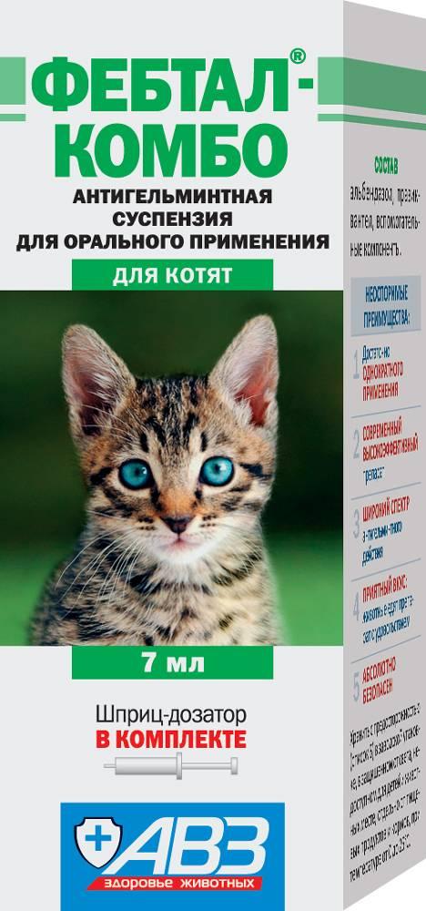 Как быстро вывести глисты у кошек с помощью народных средств | паразиты