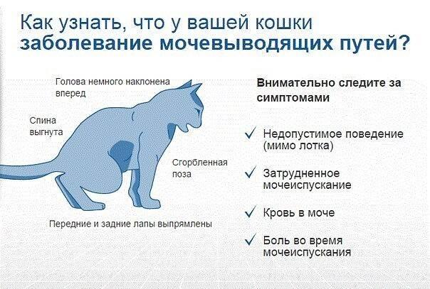 Судороги у кошки: причины, массаж, препараты. возраст кошки