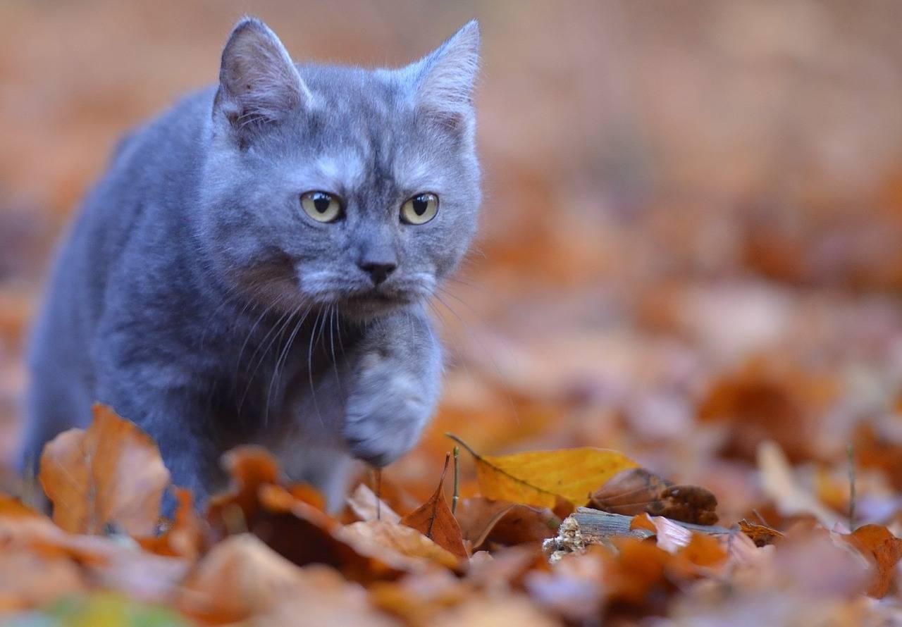 Приметы про кошек разных цветов