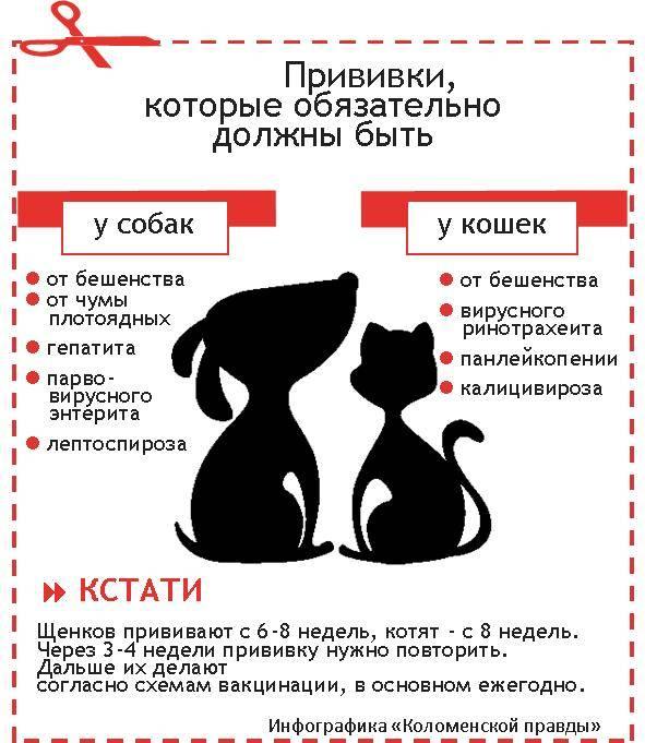 Развитие котят по неделям и месяцам: как растут котята в течение первых 6 месяцев. - petstime.ru