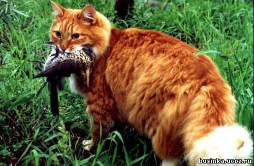 Можно ли давать кошкам макароны?   кот и кошка