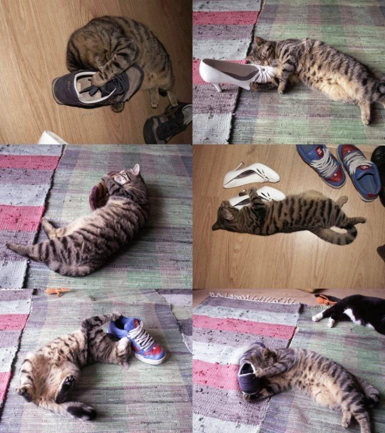 Cколько дней длится течка у кошки