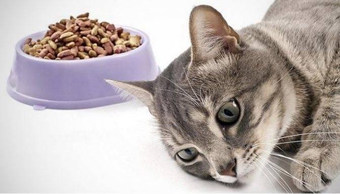 Что делать, если кот ничего не ест и пьет только воду?
