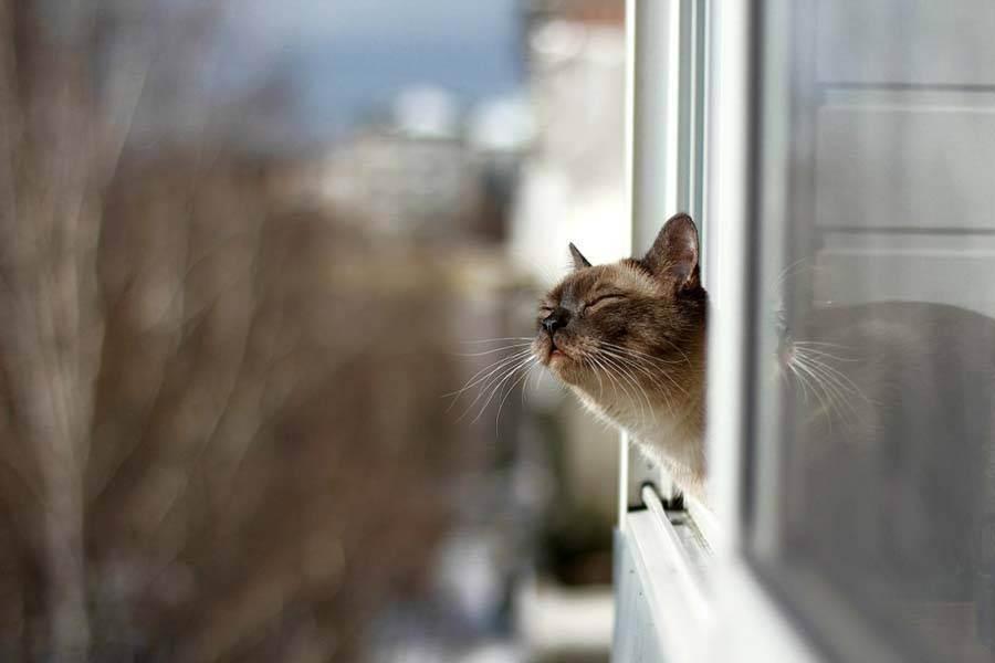 Зов природы или шалость? основные причины, почему кот ест комнатные цветы