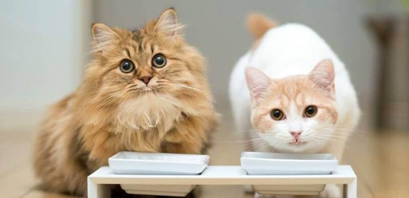 Костная мука для кошек