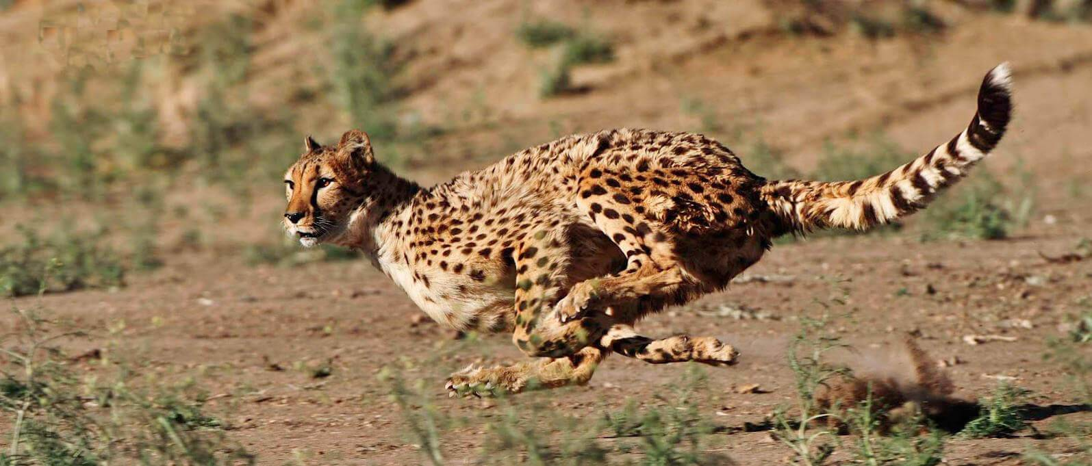 25 самых быстрых в мире животных