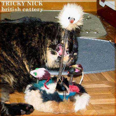 Tag archives: уход за шерстью кошек