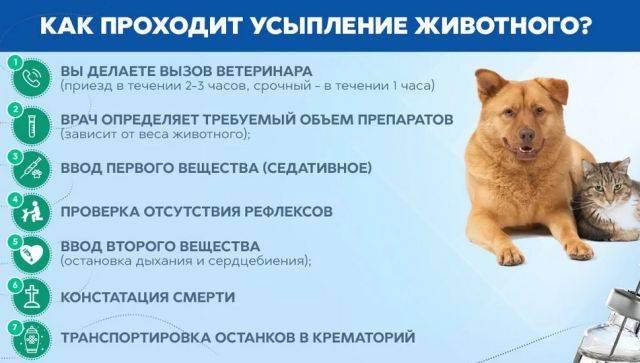 Эвтаназия кошек и котов - как происходит и где похоронить любимца | caticat.ru
