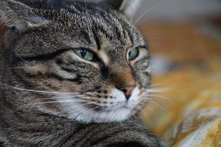 Как согреть кошку после купания. как высушить кота после купания. как правильно высушить кошку после купания