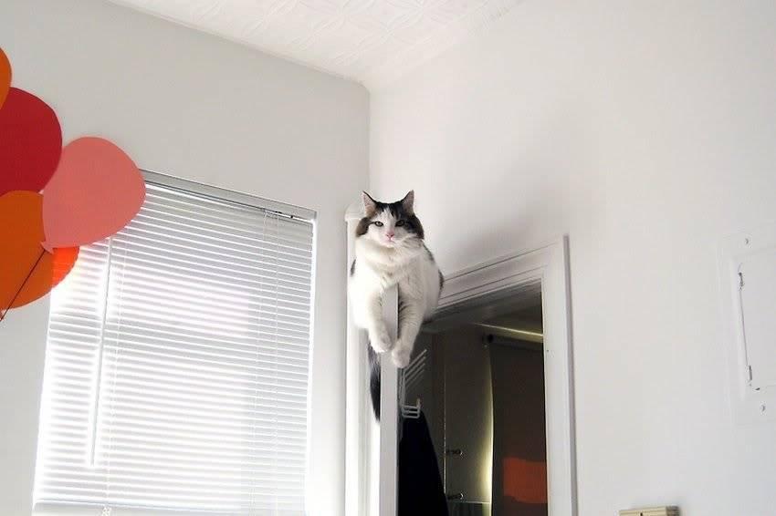 Они видят больше: почему коты смотрят туда, где ничего нет
