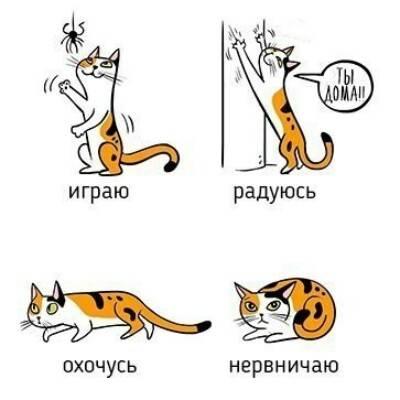 Язык котов или как научиться понимать свою кошку