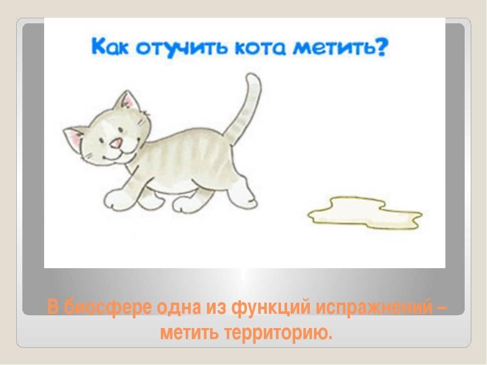 Как отучить кота метить территорию: что делать если метит в квартире, доме как отучить кота метить территорию: что делать если метит в квартире, доме