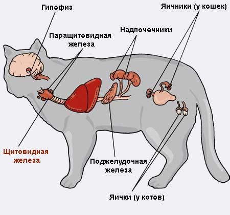 Ушиб лапки у котенка: видимые симптомы, лечение и первая помощь при травмах