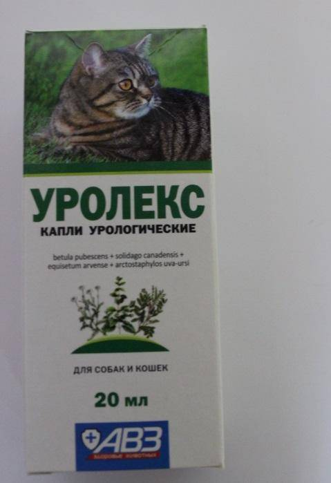Мочекаменная болезнь у кошек: лечение, симптомы, диета, корм   zoosecrets